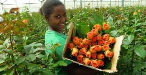 Kenya Cut Flower Exports